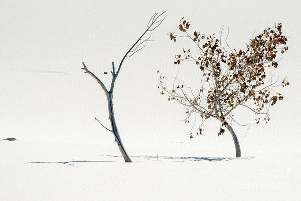 White Sand Photograph - Survival Of The Fittest by Mike Dawson
