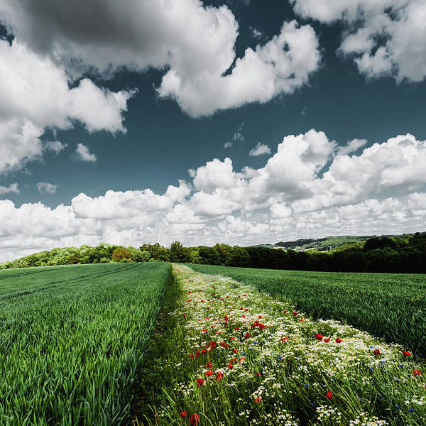 Photograph - Sustainable Agriculture by Dirk Wuestenhagen