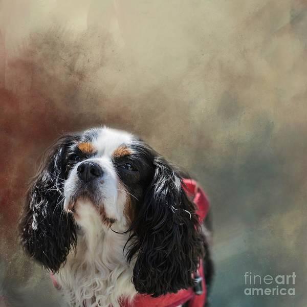 Photograph - Suzy by Eva Lechner