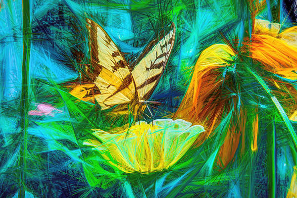 Photograph - Swallow Tail Butterfly Beautiful Abstract by Don Northup