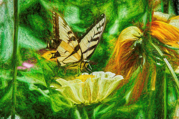 Photograph - Swallow Tail Butterfly Gloomy Green by Don Northup