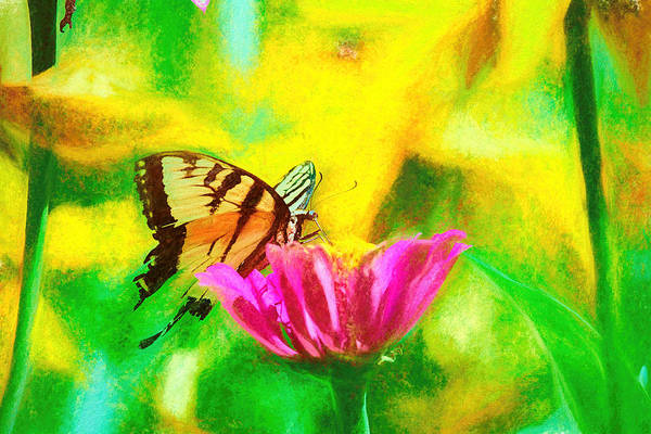 Photograph - Swallow Tail Butterfly Smudge by Don Northup