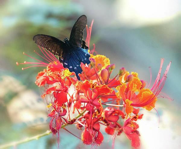 Wall Art - Photograph - Swallowtail And Bird Of Paradise  by Saija Lehtonen