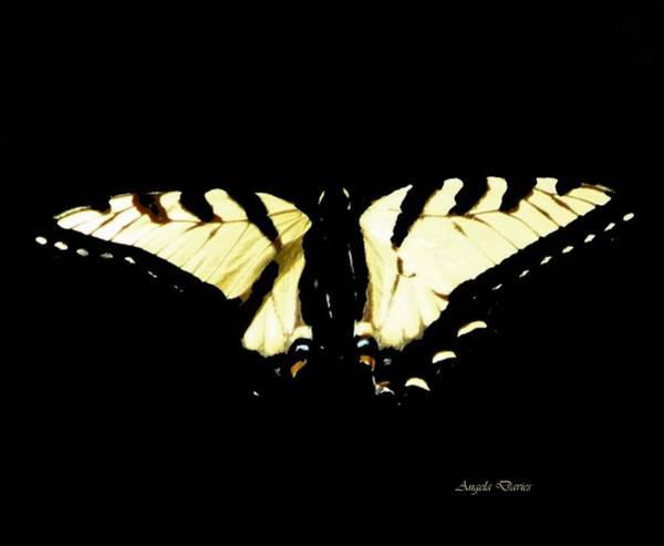 Photograph - Swallowtail by Angela Davies