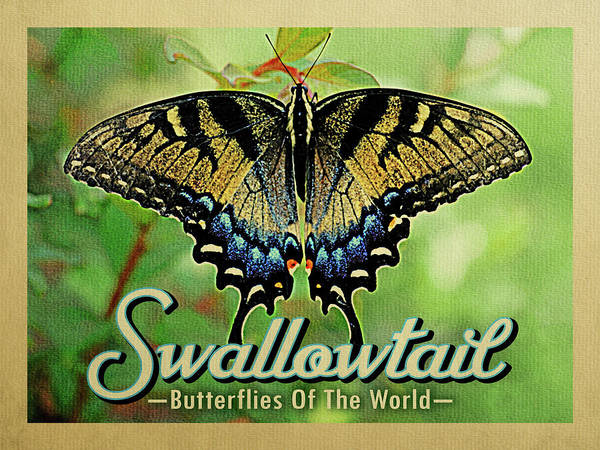 Eastern Digital Art - Swallowtail Butterfly - Butterflies Of The World 	 by Flo Karp