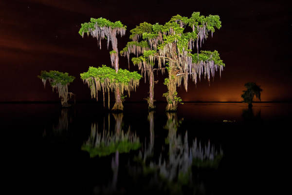 Photograph - Swamp After Dark by Andy Crawford