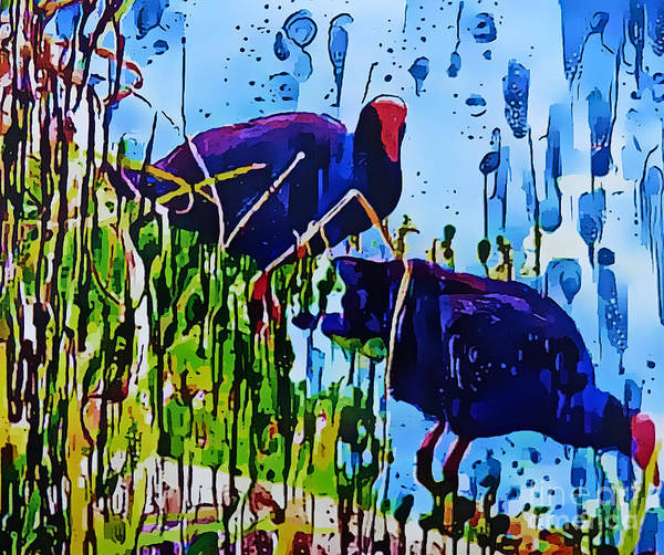 Wall Art - Mixed Media - Swamp Hen Abstract by Trudee Hunter