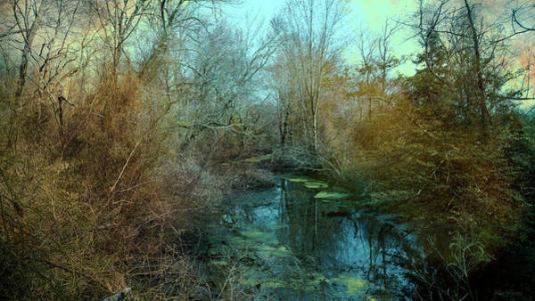 Photograph - Swamp by John Rivera
