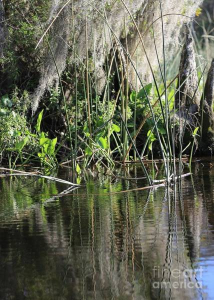 Wall Art - Photograph - Swamp Reflection Of Reeds by Carol Groenen