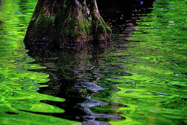 Bald Cypress Digital Art - Swamp Reflection by Orenda Pixel Design