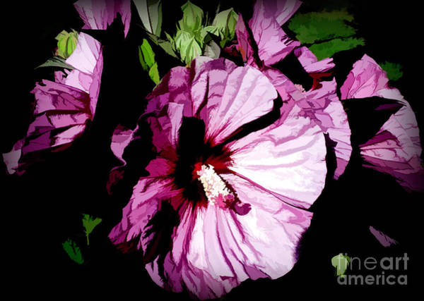 Photograph - Swamp Rose Mallow by Diana Mary Sharpton