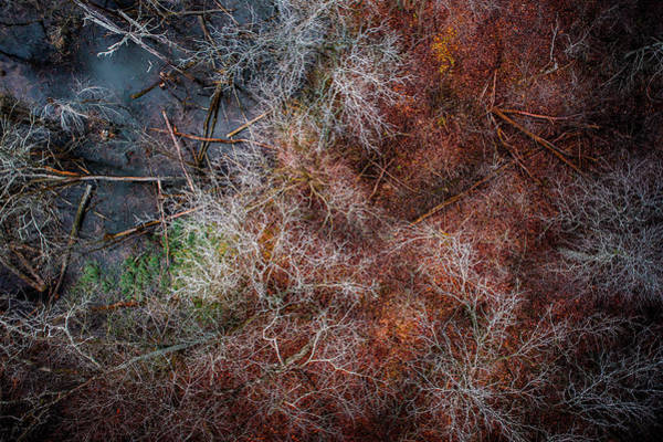 Photograph - Swampy Trees by Nick Smith