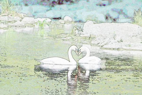 Wall Art - Photograph - Swan Heart Love You Forever by Marlin and Laura Hum