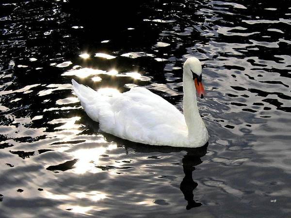 Photograph - Swan In Electric Waters by Will Borden