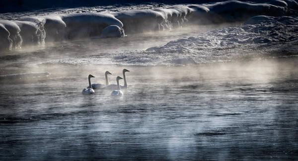 Wall Art - Photograph - Swan Lake by Karen Wiles