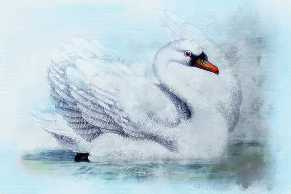 River Scene Mixed Media - Swan Sketch by Amanda Lakey