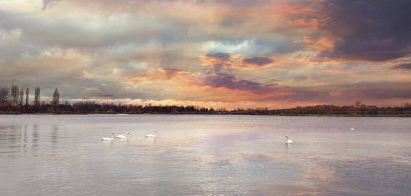 Photograph - Swan Song by Heather Applegate