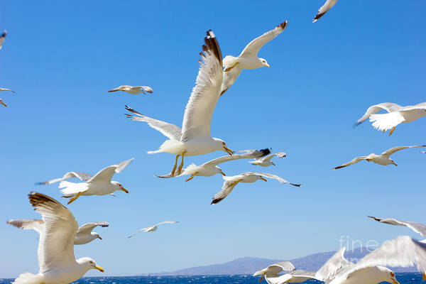 School Wall Art - Photograph - Swarm Of Sea Gulls Flying Close To The by Smoxx