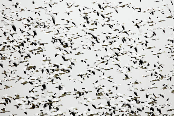 Wall Art - Photograph - Swarm by Todd Klassy
