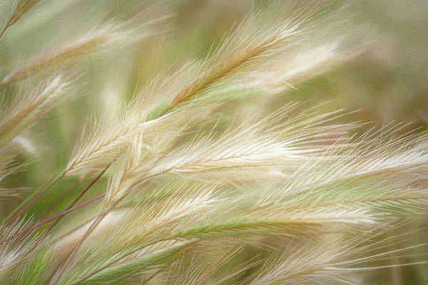 Photograph - Swaying Grasses by Leda Robertson
