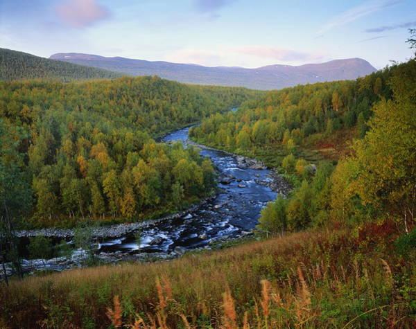 Birch River Photograph - Sweden,birch Forest In Autumn Along by Roine Magnusson