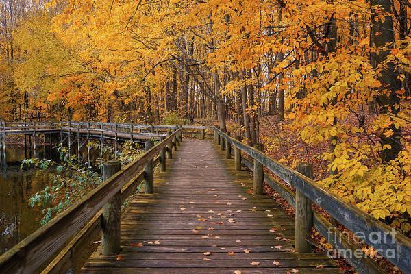 Photograph - Sweet Autumn Memories by Rachel Cohen
