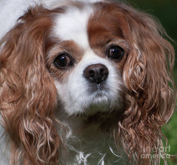 Photograph - Sweet Face by Dale Powell