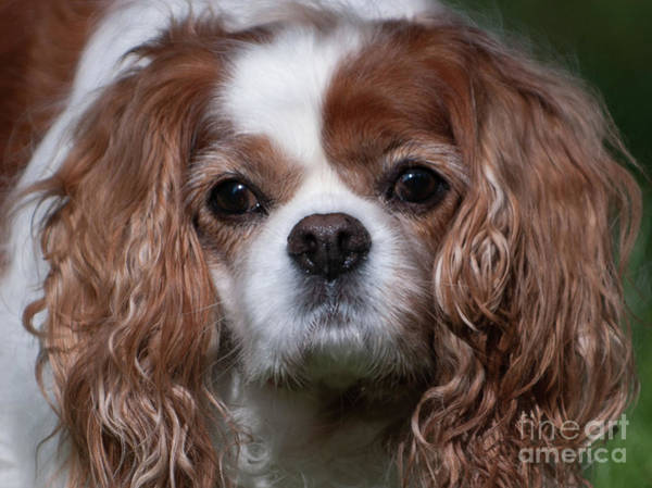 Photograph - Sweet Face Of Miss Daisy by Dale Powell