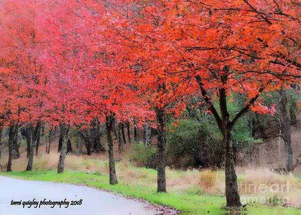 Photograph - Sweet November  by Tami Quigley