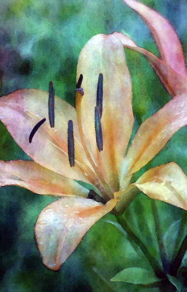 Photograph - Sweet Orange 7143 Idp_2 by Steven Ward