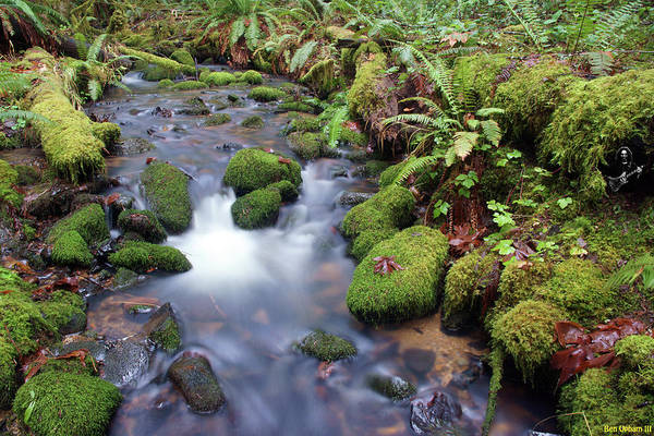 Photograph - Sweet Sounds At The Creek by Ben Upham