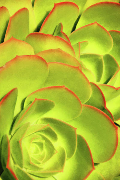 Photograph - Sweet Succulents II by Leda Robertson