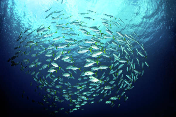 Fish Photograph - Swimming Fishes by Extreme-photographer