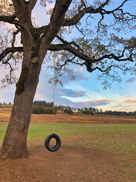 Photograph - Swing In Tree by Brian Eberly