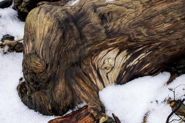 Wall Art - Photograph - Swirls Burls And Snow by Tom Trimbath
