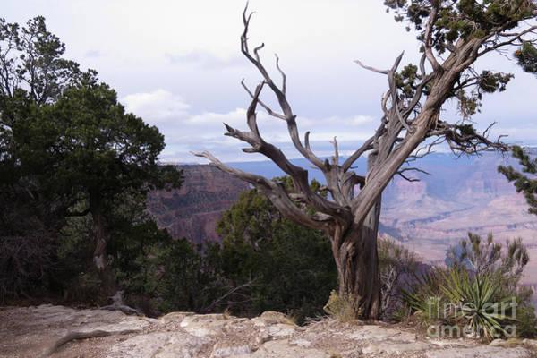 Photograph - Swirly Tree by Mary Mikawoz