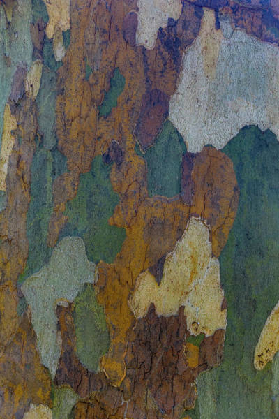 Wall Art - Photograph - Sycamore Tree Bark Design Oak Creek by Darrell Gulin