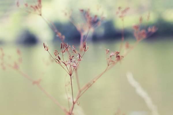 Nature Mixed Media - Sylvan by Winston Mauricio Sobalvarro