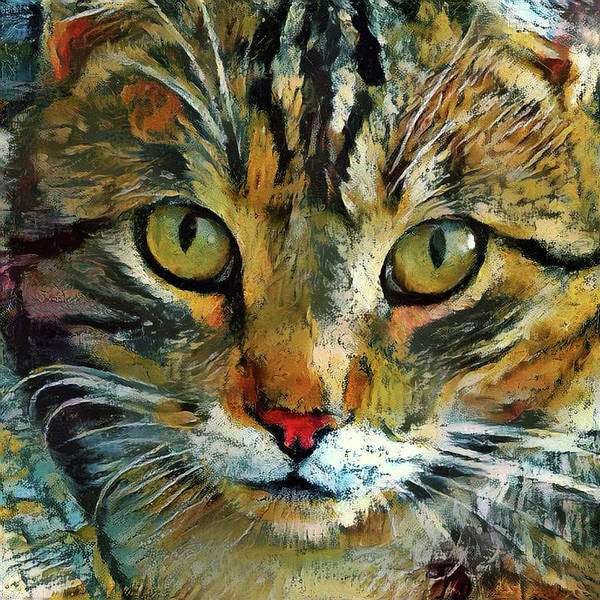 Mixed Media - Tabby Cat Closeup - That Look by Peggy Collins