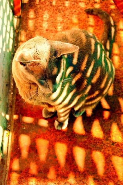 Gorecki Photograph - Tabby Cat by Henryk Gorecki