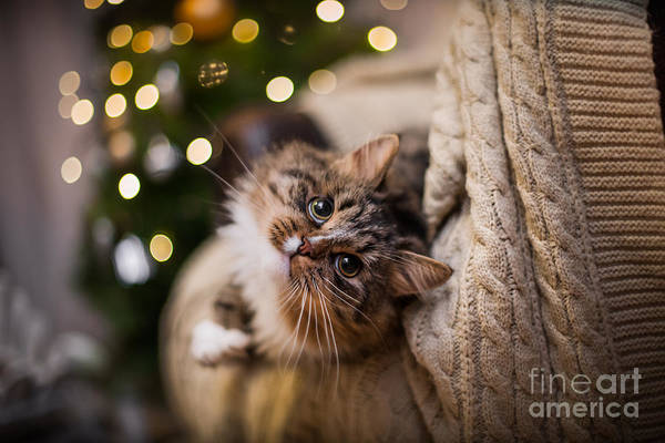 Wall Art - Photograph - Tabby Cat Plays At The Christmas Tree by Dezy