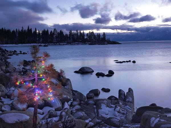Wall Art - Photograph - Tahoe Christmas Tree 2 by Martin Gollery