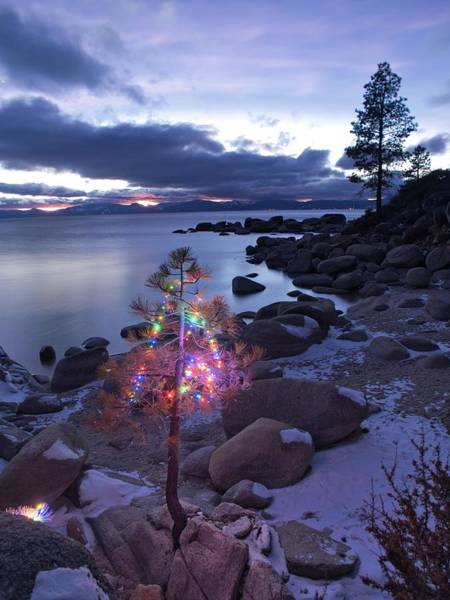 Wall Art - Photograph - Tahoe Christmas Tree by Martin Gollery