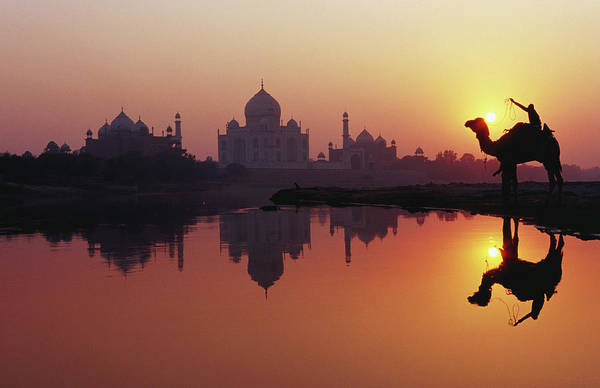 Animal Place Photograph - Taj Mahal & Silhouetted Camel & by Richard I'anson