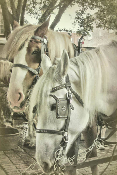Photograph - Take A Carriage Ride by JAMART Photography