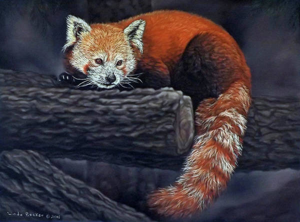 Painting - Takeo, The Red Panda by Linda Becker