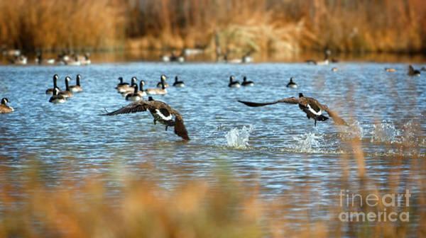 Photograph - Taking Flight by Susan Warren