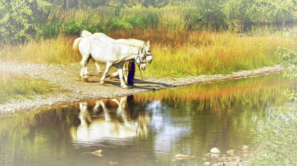 Photograph - Leading The Horses To Water by Ola Allen