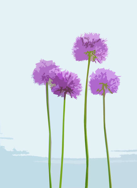 Digital Art - Tall Alliums by Garden Gate magazine