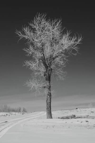 Photograph - Tall by Dan Urban